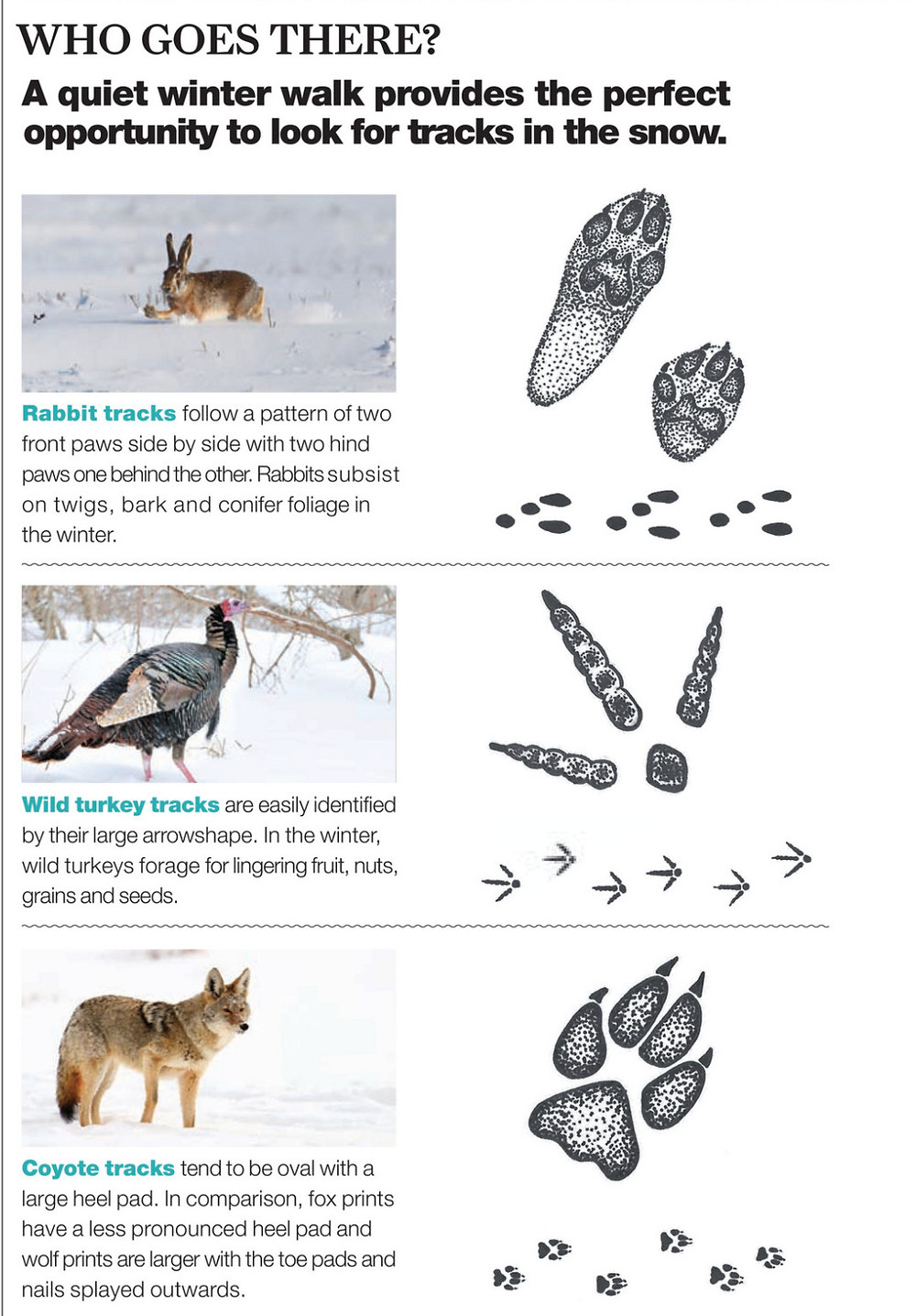 Identifying animal tracks in the snow with Nature Conservancy Canada Tracking Guide in Haliburton