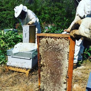 Jour de récolte du miel