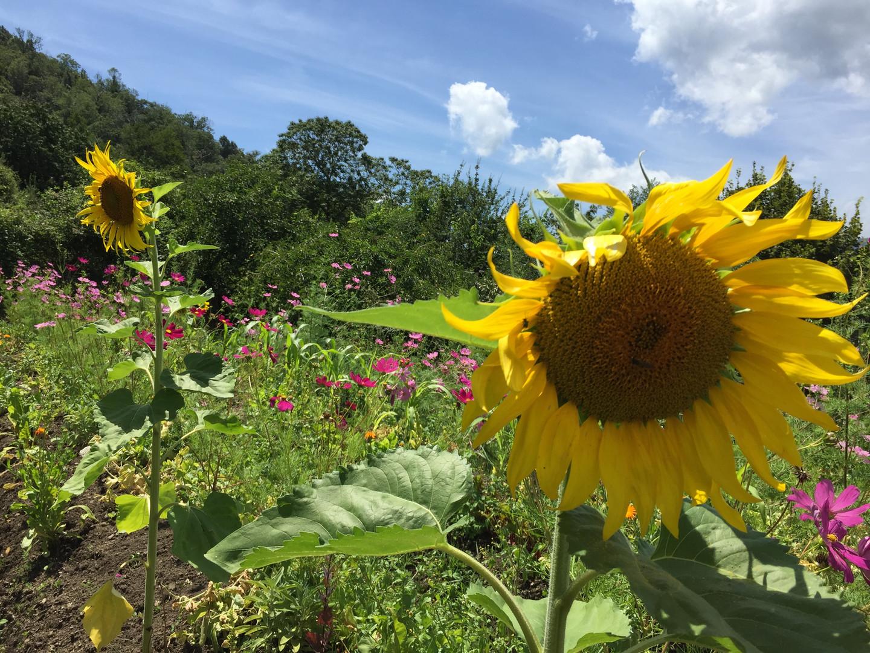 Jardin fleuri pour nos abeilles