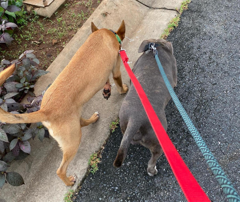 50 min dog walk and feed