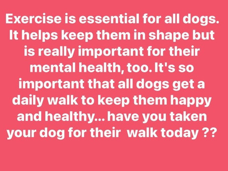 Keep your dog fit by giving them a daily walk