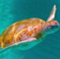 sealife.jpg