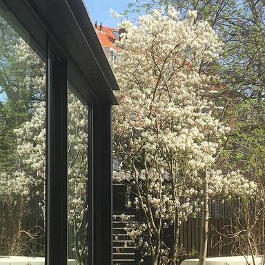Springtime!! #leiden #monument #extensio