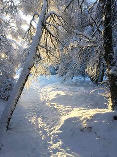 Trees in snow.jpg