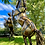 Thumbnail: Rearing Horse 05 - COMING SOON