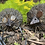 Thumbnail: Hedgehog - Small
