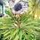 Thumbnail: Sunflower