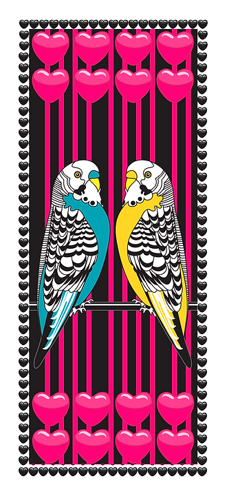 Budgie-Love.png