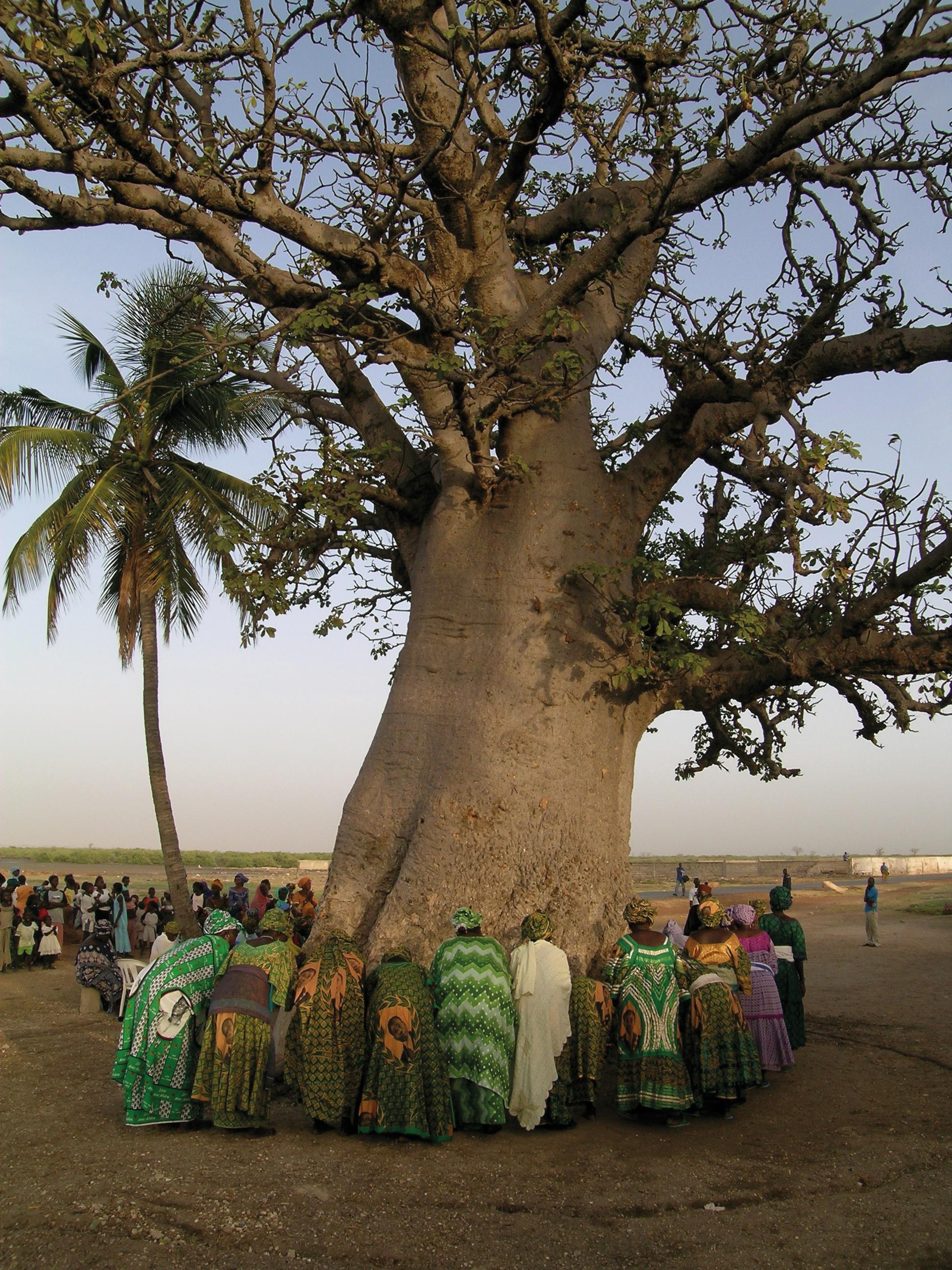 Symbiose pour un esprit baobab