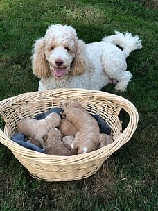 Lily Puppies 3 Oct 5.jpg