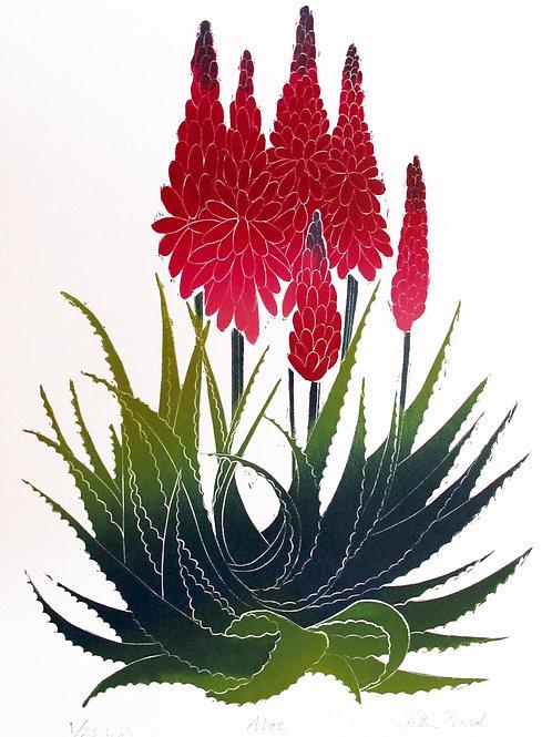 """Judith Stroud """"Aloe"""""""