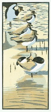 Five Lapwings