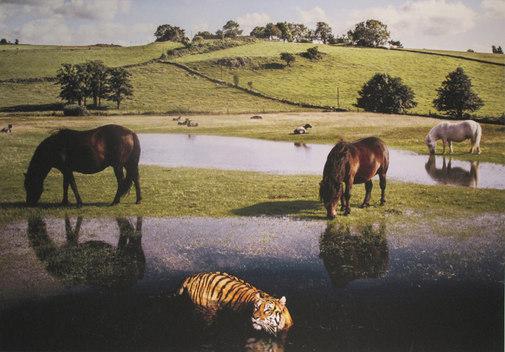 Tigern