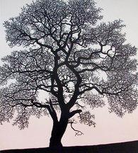 Heart Oak