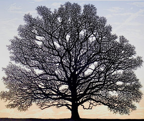 Dartmoor Oak