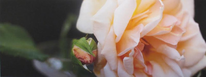Rosa Prince de Bulgarie