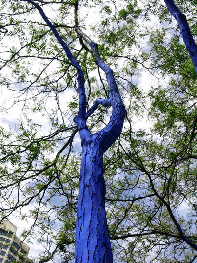 THE BLUE TREES