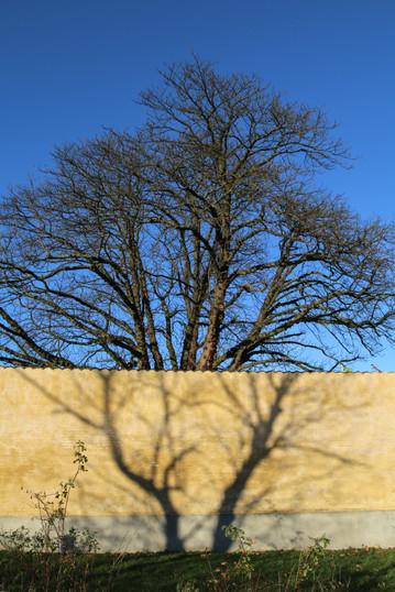 THE INFINITY TREE
