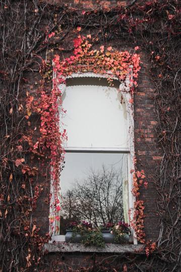 THE WINDOW TO WONDERLAND