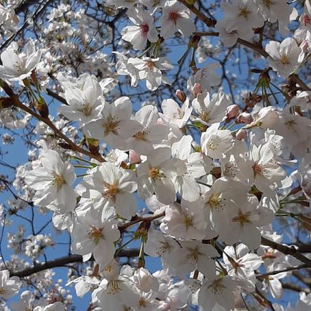 音や絵で春を感じて〜読み語り〜