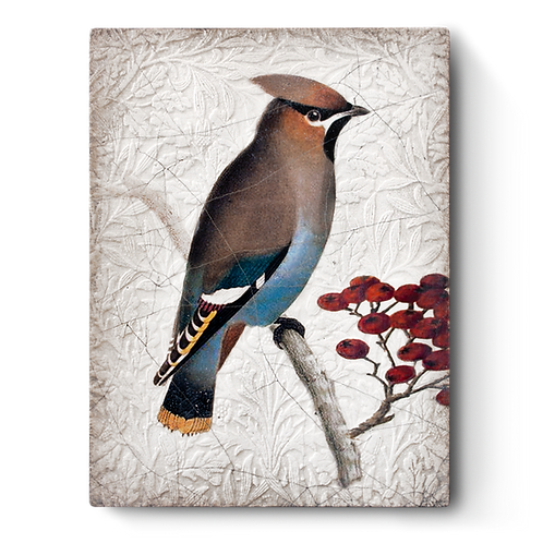 T-485 WAXWING