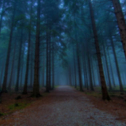 foggy-forest-desktop-background-For-desk