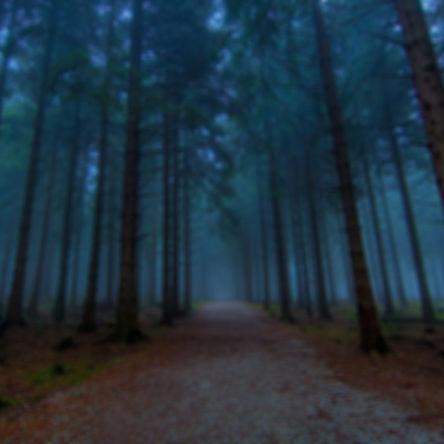 foggy-forest-desktop-background-For-desk