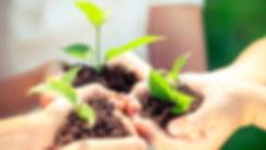 kind-plantjesshutterstock_253820563_edit
