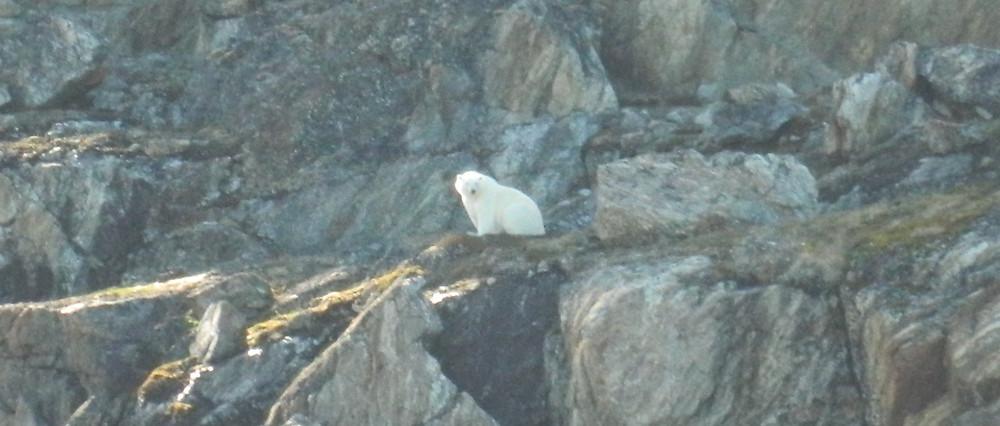 DSCN1408b - Polar Bear - Kekertaluk Island, Baffin I..jpg