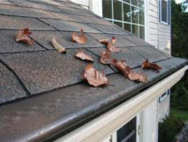 Gutter Rudder, The Finest in Gutter Protection
