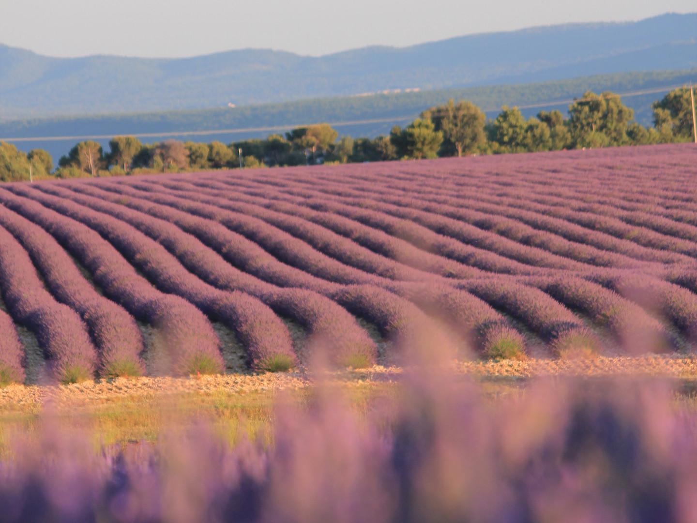Corporate event Lavendel Fields