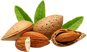 Almonds transparent final.PNG