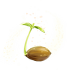 NicePng_sprout-png_left 2650503.png