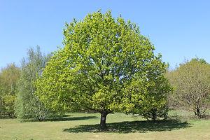 IMG_1251 - Tree.JPG