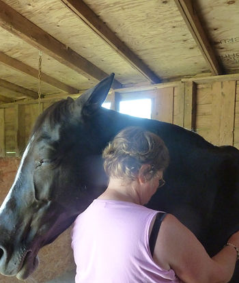 Bee giving Reiki to Libby - horse