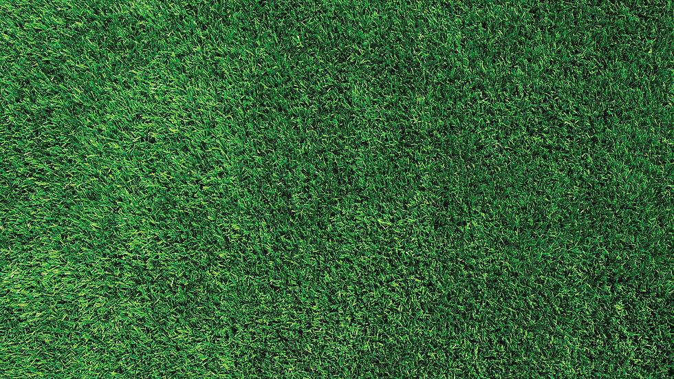 Grass3-1.png