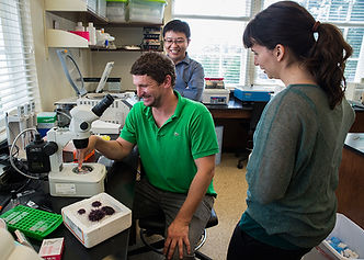 Sea_Urchin_Research_Lab_Biology_Harned_2
