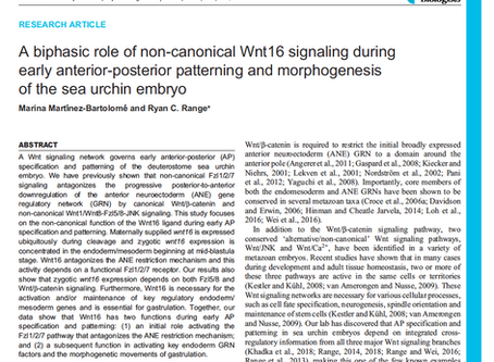 New article in Development: A biphasic role of non-canonical Wnt16 signaling