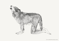 מורן קליגר, זאב אפור (מצוי) 2011, 90-150 ס״מ, דיו על נייר