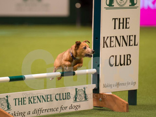 LINDA AND DOTTIE PERFORM IN CRUFTS CHAMPIONSHIP AGILITY 2017