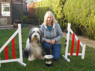 SANDIE AND ANGUS WIN BEARDED COLLIE CLUB AGILITY STARTERS CUP