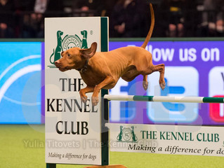 TRACY AND LOKI DEFEND TITLE AT CRUFTS