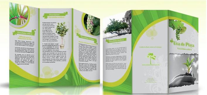 broşür tasarımları