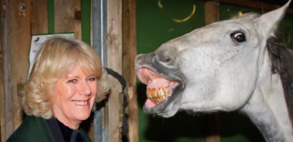 Duchess of Cornwell with a smiling horse.