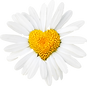 full daisy.png