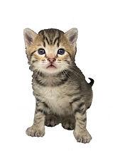 Kittens11a.jpg