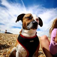 Toby Dog