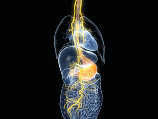 Fibromyalgia – The Vagus Nerve  - Gyrotonic