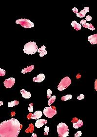 Petals_edited.png