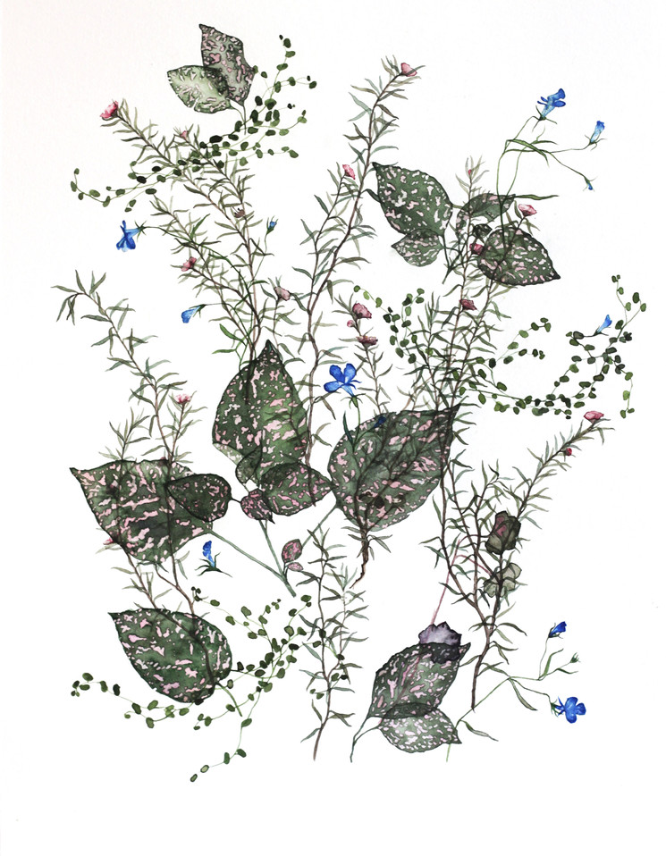 The Leaves of the Manuka Tree Have Been Laid Down (2017) Watercolour on paper 400 x 500mm.